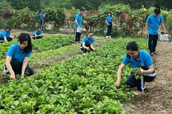 Cải tạo điểm đen về rác thải thành vườn rau phụ nữ