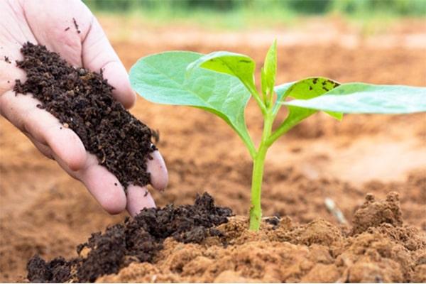 Ủ rác hữu cơ làm phần compost góp phần xây dựng ý thức phân loại chất thải rắn tại nguồn